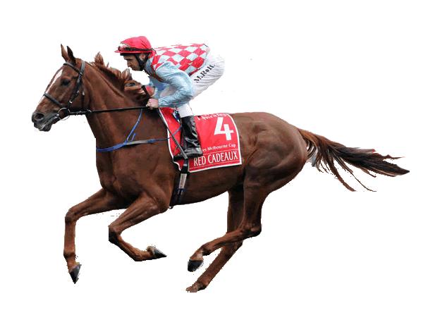 Superfecta Horse Racing Betting - Box, Wheel, Payouts